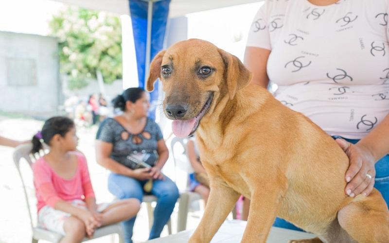 Photo of La adopción animal una grata experiencia
