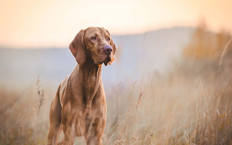 Photo of Resistencia de los perros a enfermedades priónicas puede ayudar a desarrollar nuevas terapias
