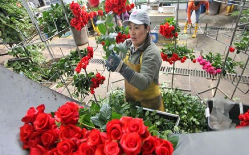 Photo of La venta local de flores está en manos de pequeños negocios