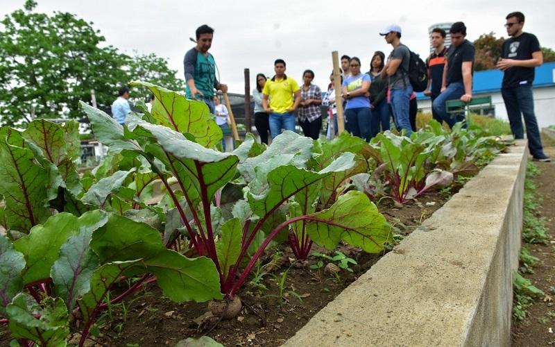 Photo of Alumnos de la Universidad Católica se capacitan en agricultura orgánica