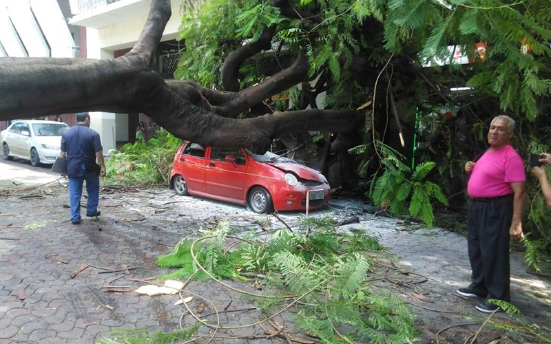 Photo of Municipio de Guayaquil pagará por caída de árbol en auto