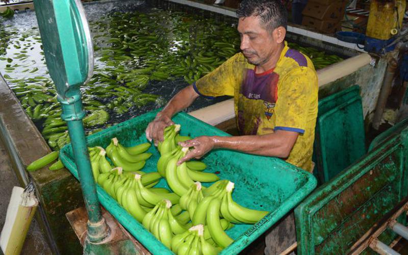 Photo of Los bananeros denuncian irregularidad en contratos