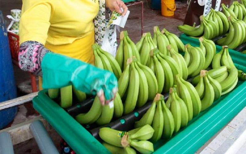 Photo of Sector bananero solicita al Gobierno cuatro medidas inmediatas para mitigar los efectos del covid-19