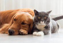 Photo of ¿Perros o gatos? Qué animales son más susceptibles al coronavirus