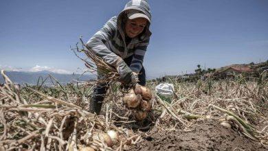 Photo of La música rinde homenaje a agricultores de América por su trabajo en pandemia