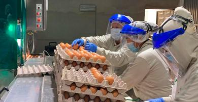 Photo of Productores toman precauciones para evitar contagios por Covid-19
