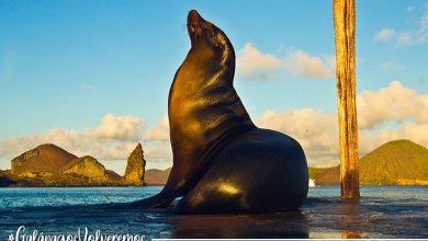 Photo of Galápagos impulsa campaña digital para promover la reactivación del turismo posterior a la emergencia