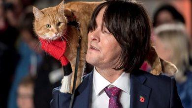 Photo of Muere el felino que inspiró el libro «Un gato callejero llamado Bob»