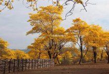 Photo of Ecuador construirá un centro de administración para los «Bosques de la Paz»
