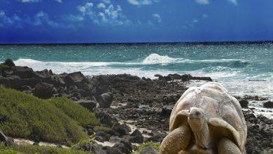 Photo of La falta de vuelos dificulta la apertura turística en Galápagos