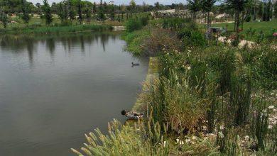 Photo of Cuidar de la biodiversidad para proteger nuestra salud