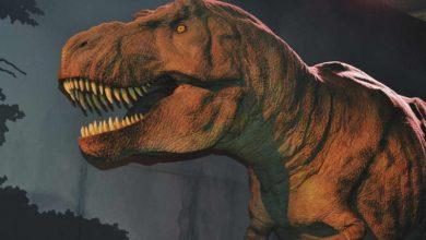 Photo of Google te deja ver 10 especies de dinosaurios con realidad aumentada