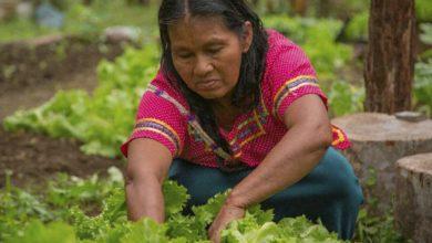 """Photo of Ecuador se suma a la campaña regional """"Mujeres rurales, mujeres con derechos"""""""