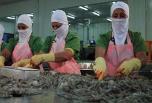 Photo of Ecuador reforzará protocolos en empacadoras de camarón tras detección de material genético de coronavirus en contenedor