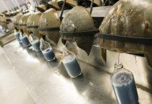 Photo of Vacuna contra el coronavirus | Por qué la «sangre azul» de unos cangrejos es clave en la lucha contra el covid-19