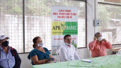 Photo of Productores bananeros analizan paralización de sus actividades ante abandono de las autoridades
