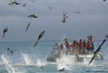 Photo of Islas Galápagos celebraron 61 años como primera área protegida en Ecuador