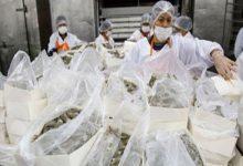 Photo of China readmite las exportaciones de camarón ecuatoriano tras supervisar sus protocolos contra la covid-19