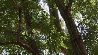 Photo of Ecuador fortalece las acciones para la conservación del cedro