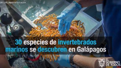 Photo of 30 especies de invertebrados marinos se descubren en Galápagos