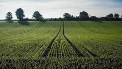 Photo of Economía con cero emisiones de carbono, alternativa para combatir el cambio climático y superar la crisis de coronavirus