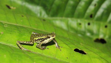 Photo of Los anfibios: especies clave para medir la salud del planeta