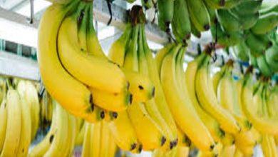 Photo of MAG anuncia estrategia integral para el sector bananero