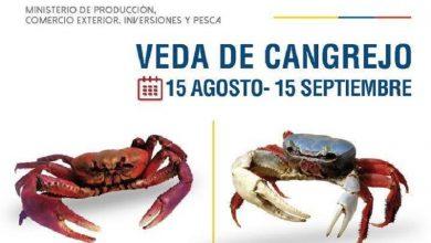 Photo of Segunda veda anual del cangrejo comienza este sábado 15 de agosto