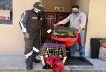 Photo of Ministerio del Ambiente y Agua evita la comercialización ilegal de 53 pericos caretirrojo en Loja