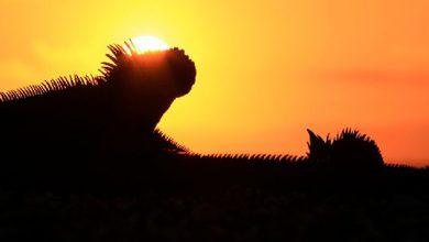 Photo of Galápagos: un laboratorio vivo de la evolución celebra sus 42 años como Patrimonio Natural de la Humanidad