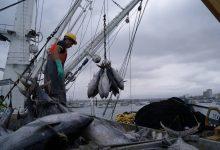 Photo of Acuerdo ministerial habilitaría a flota pesquera ecuatoriana a pesca de calamar gigante
