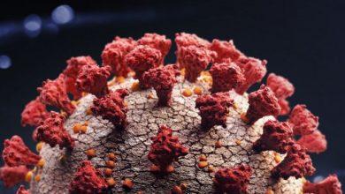 Photo of Coronavirus: los virus mortales que desaparecieron sin dejar rastro (y qué lecciones nos dejan para combatir el coronavirus)