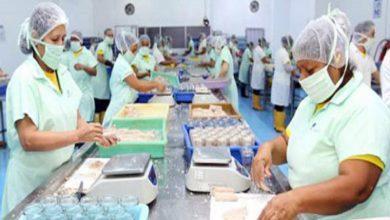 Photo of El sector pesquero exportador espera cerrar 2020 con una caída del 5%