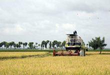 Photo of Ecuador alista exportación de arroz hacia Colombia