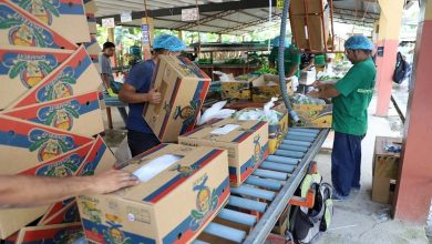 Photo of Observando a mercados y competidores, el MAG fija hoy el precio de la caja de banano para el 2021