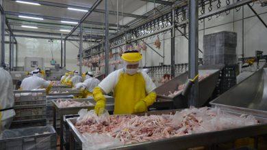Photo of Consumo de pollo crece en Ecuador, pero producirlo cuesta más que en países vecinos