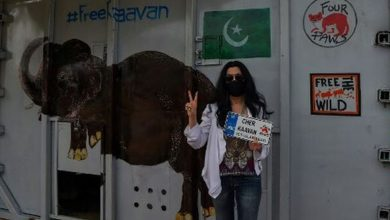 Photo of Cher recibe en Camboya a elefante maltratado en Pakistán