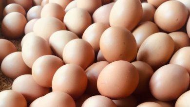 Photo of 8 datos fascinantes sobre los huevos, uno de los alimentos más nutritivos del mundo